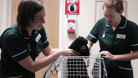 Millie being checked over by vets after she was found. Pic: Wendy Hilling.