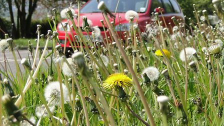 Roadside verges in Barnstaple will now be cut six times a year thanks to funding secured by the town