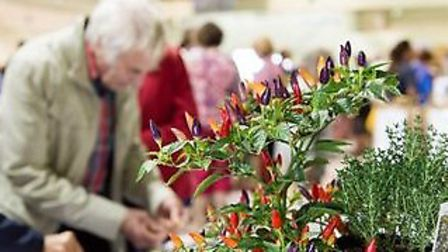 Go wild about growing, eating and even wearing chillies at the new Devon event in May. Photo: RHS