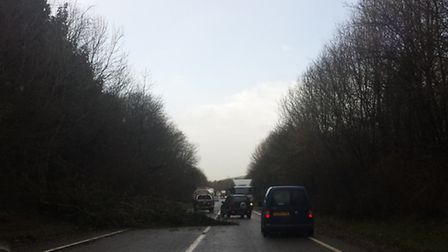 Jim Duncombe sent in this photo of the tree blocking the Link Road.