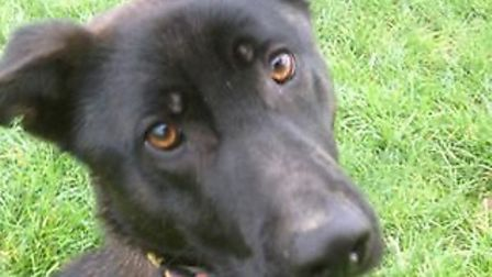 Lively Marley just wants to play and be cuddled in equal amounts!