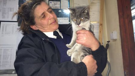 Diesel the cat with RSPCA Animal Collections Officer Julie Parsons.