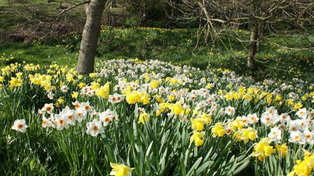 Hartland Abbey will be in full bloom this March.