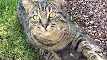 Have you seen this cat in the Bickington area?