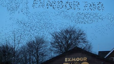 A message from new feathered friends? The picture that has bamboozled staff at Exmoor Zoo.