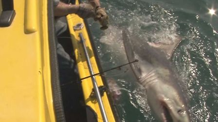 The big shark is brought to the side of the boat. Pic: Graeme Pullen/bnps.