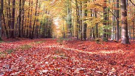 Where are the best places to walk in North Devon during autumn?