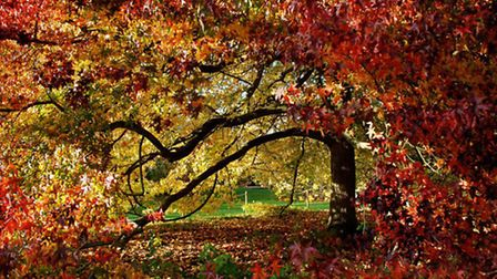 RHS Rosemoor is a great place to explore in Autumn. Picture: RHS