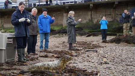 RSPCA staff and onlookers smile as the seals head for freedom