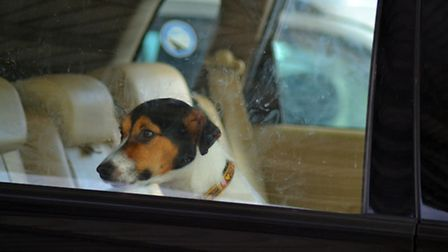 Police are warning people not to leave their dog in the car during hot weather.