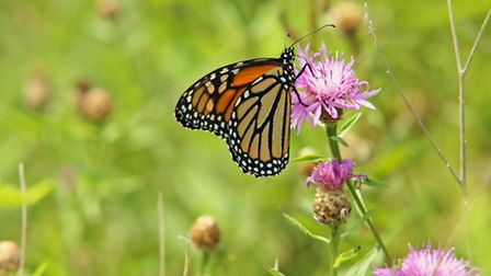 Butterflies need your help this autumn.