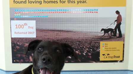 Saxo is the 100th dog to be rehomed by Dogs Trust Ilfracombe