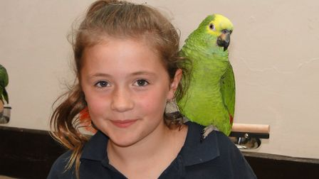 Volunteer Lexi Edwards, nine, with Charlie the Amazon. Picture: Tony Gussin