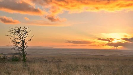 The raw beauty of Molland Common at sunset, photographed by Austin Wallas, from Barnstaple. Picture: