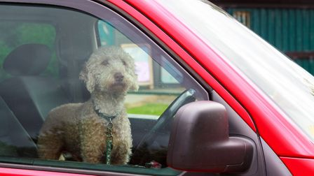 Leave your dog at home in hot weather - they can die in hot cars.