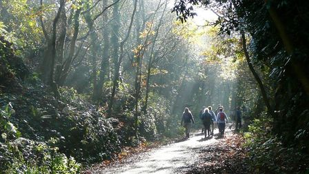 Stroll the leafy byways of Torrington on New Year's Eve. Picture: ND Ramblers