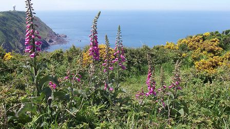 Taken on the Coast Path around the rugged coast line of Hartland North Devon. Picture: Lyn Fursdon