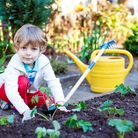 Growing your own organic vegetables can be fun for all ages. Picture: Getty Images/iStockphoto