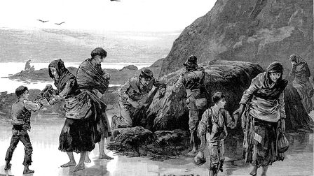 Distress in Ireland: Collecting limpets and seaweed for food in west of Ireland. Failure of the pota
