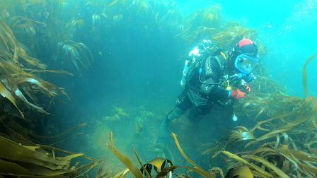Diver surrounded by kelp looking into a possible shell hoist used to transfer shells to the gun turr