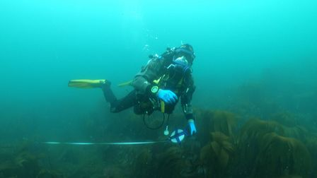 Diver Graham Scott surveying the wreck of HMS Montagu which is covered in kelp. Picture: Wessex Arch