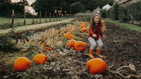 Pumpkins and apples from the Clovelly garden. Picture: Terry Annis