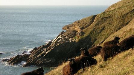 Discover the majesty of Baggy Point with a free North Devon Ramblers winter walk. Picture: NDR
