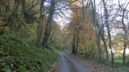 Join the Ramblers for a Braunton walk, including Buckland Woods. Part of their Festival of Winter wa
