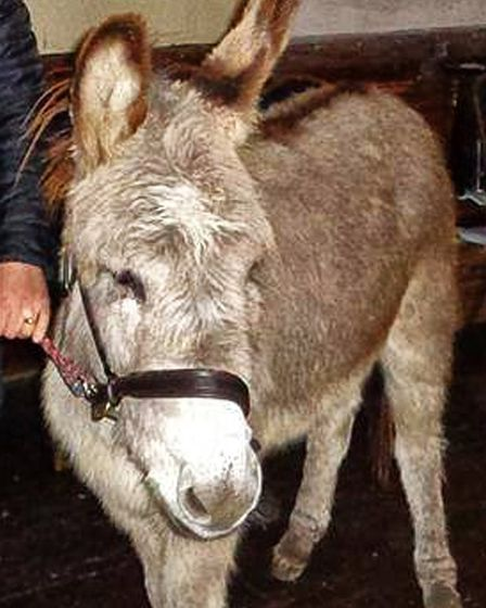 Bobby the donkey will be making his fourth appearance at St Margaret's Church in Northam on Christma