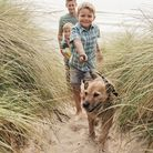 Which beaches are dog friendly in North Devon? Picture: Getty Images/iStockphoto