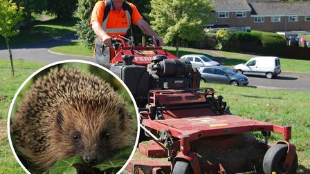 North Devon Council contractors are putting hedgehog warning signs on all their grass cutting equipm