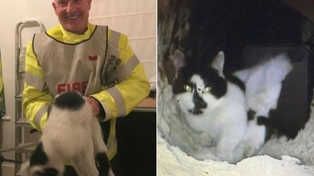 Cat the cat was rescued from a chimney at the premises of AD Williams funeral directors in Ilfracomb
