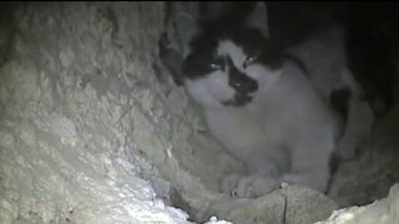 Cat the cat caught on camera trapped in the disused chimney at AD Williams funeral directors in Ilfr