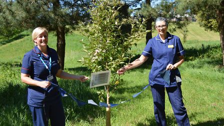 Deputy chief nurse Lucy Bates and nutrition nurse Stephanie Foster unveil the cherry tree in the gro