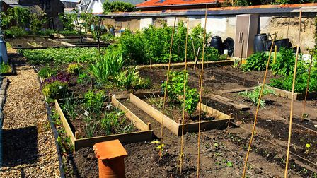 The allotments at Penrose Almshouses in Barnstaple are being considered as a site for new almshouses