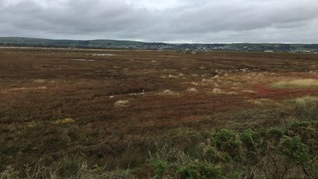 The 80 hectares of wetland at Horsey Island has been bought by Devon Wildlife Trust. Picture: Andy B