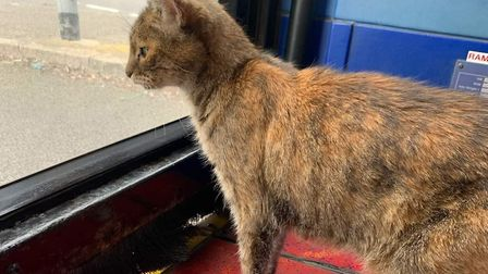 PC the pub cat is back at The Coaching Inn at South Molton after a bus ride to Barnstaple and then Ilfracombe. Picture...