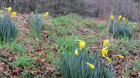 Below the fifth tee; a cheerful harbinger of spring on a dark, damp January morning
