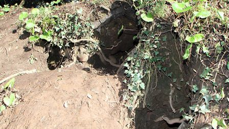 The badger sett on Convent Road where local dog owner, June Barber, lost her dog Rosie. Picture by A