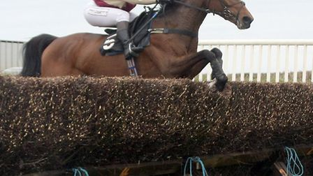 The winner of the opening race at Stafford Cross point to point. Photo by Terry Ife ref mhsp 1545-18