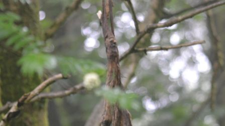 A deer leg spotted hanging in a Sidbury tree