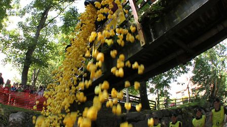 Spectators line the banks as hundreds of tiny yellow plastic ducks are tipped into the River Sid fro