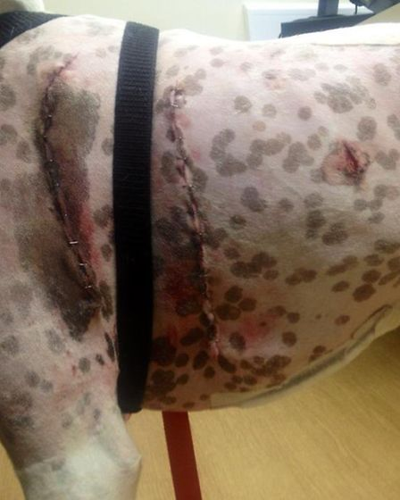 Mo''s horrific injuries included a punctured lung, stomach and diaphragm