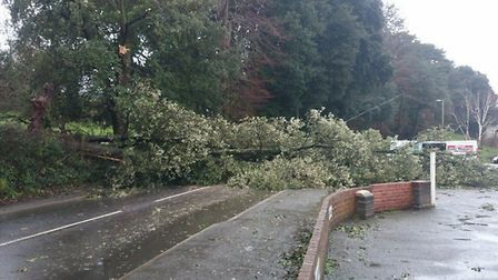 Winds brought down a tree that blocked Station Road