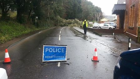 Station Road was closed due to the toppled tree. Photo by Michael Lane.
