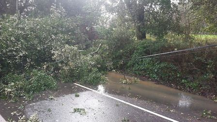 The tree tore down power lines in Station Road. Photo by Michael Lane.