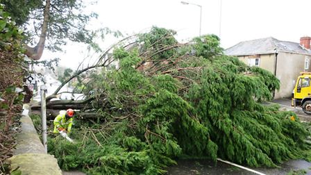 An East Devon District Council workman removes branches from the fallen tree opposite Axminster Gui