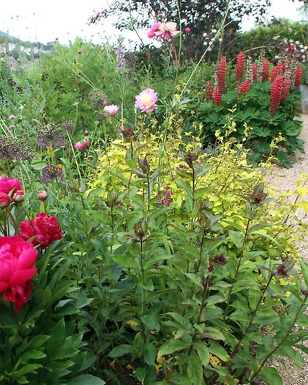 Barbara Mence looks forward to opening her Woolbrook Park garden to the public as part of the Nation