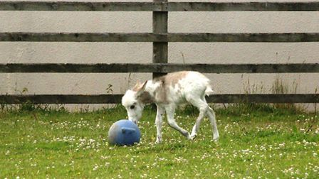 The new foal has settled in well at Sidmouth Donkey Sanctuary.