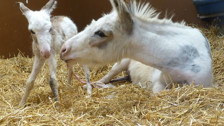 The new foal with his mother Summer.